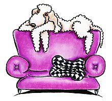Bedlington Terrier Tiko Photographic Print