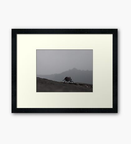 Little bug on the Great Wall Framed Print