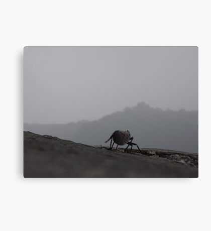 Little bug on the Great Wall Canvas Print