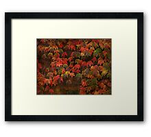Autumn Most Colourful Framed Print