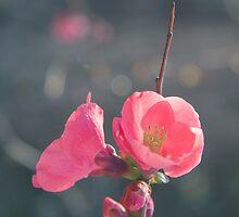 In pink by BeatrizGR
