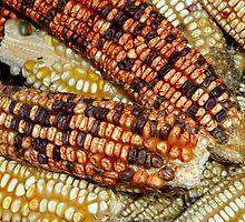 Indian Corn Again by WildestArt