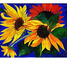 Sunflower Sisters Photographic Print