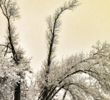 Southern Illinois Winter Scene 9_ Dec 2012 Sticker