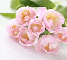 Delicate tulips by MimHarper
