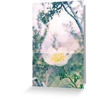 Canyon Flower Greeting Card