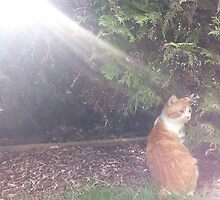 cat soaking up th sun rays by rzer0x