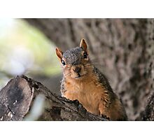 I know you have a peanut in your pocket!  Photographic Print