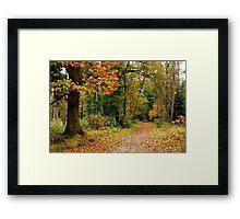 Walking on into autumn again Framed Print