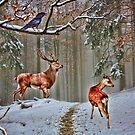 British Woodland Animals by shalisa
