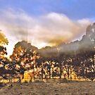 Misty Dawn, Limestone Coast, South Australia by George Petrovsky