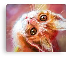 Red Kitty  Canvas Print