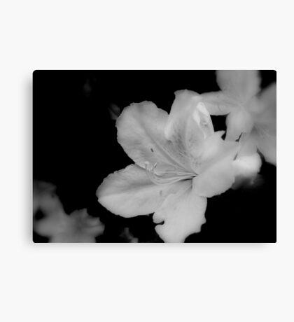 Flora - B&W    ^ Canvas Print