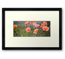 Edinburgh Poppies Framed Print