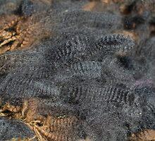Natural Charcoal Grey Romney Fleece by AliCatFiberarts