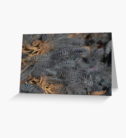 Natural Charcoal Grey Romney Fleece Greeting Card