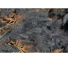 Natural Charcoal Grey Romney Fleece Photographic Print