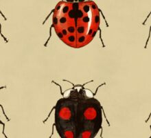 Coccinellidae entomology studies fig. 11 Sticker