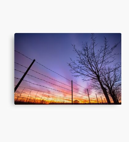 Fiery sunset viewed from the ground Canvas Print