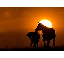Twilight Mustangs Photographic Print