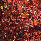 A closeup of Autumn by barnsis
