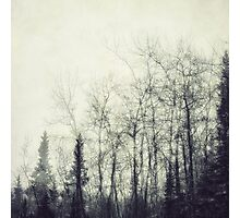 Fragility Photographic Print