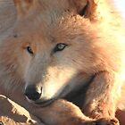 Arctic Wolf by wenniewombat