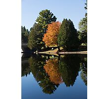Defying the Green - the First Autumn Tree Photographic Print