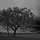 Bracing for the Storm on a Country Road by Buckwhite