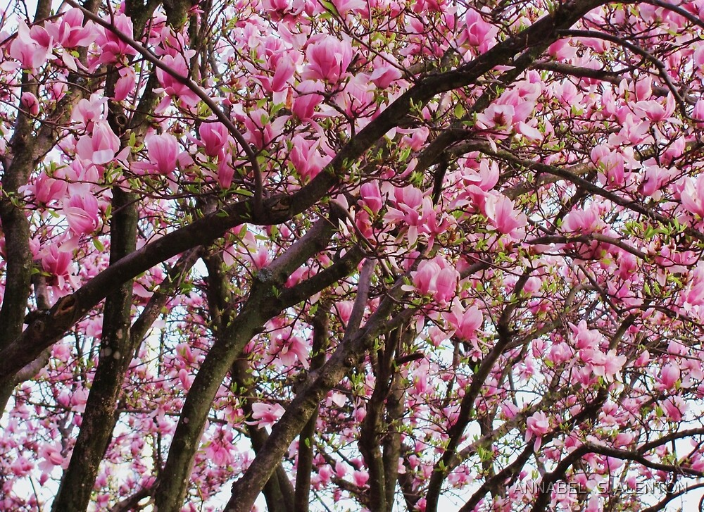 tulip trees by ANNABEL   S. ALENTON