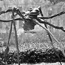Louise Bourgeois - Spider by Matsumoto