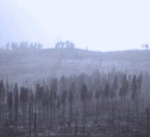 CALIFORNIA FIRE AFTERMATH by WildeEntertain