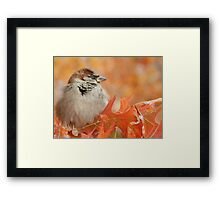 SPARROW (4) Framed Print