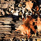 Oak Leaves Along The Tracks by Geno Rugh