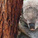 Sleeping Koala by fab2can