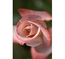 The Eye Of The Rose Photographic Print