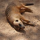 Flat out Meerkat by fab2can