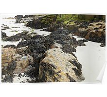 Wild Nature - Rocks, Sand and Seaweed, Great Bernera Poster