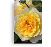 Love Of The Rose Canvas Print