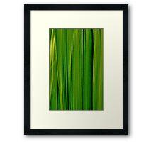 Leaf Screen Framed Print