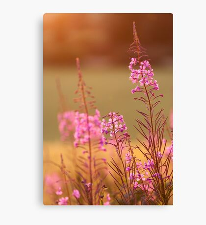 Great Willow-Herb Canvas Print