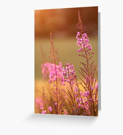 Great Willow-Herb Greeting Card