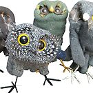 Quartet of glove owls by Ruud van Koningsbrugge