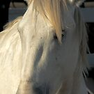 Native Horse Camargue by Louise Fahy