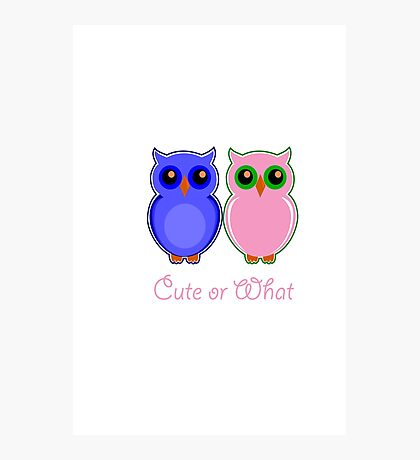 Cute or What Photographic Print