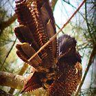 Preening Pheasant  by myraj