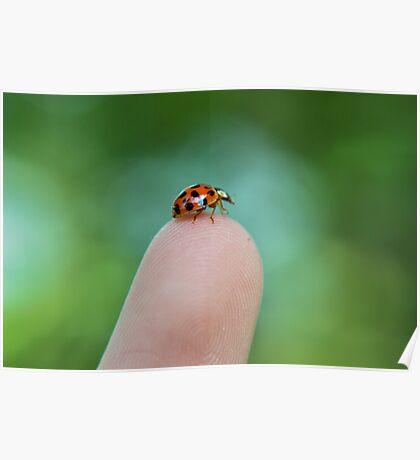 Fingertip Ladybug Poster