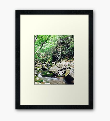 Into the Woods, 2016 Framed Print