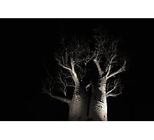 Boab Tree  Photographic Print