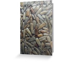 Sunflower Seeds Greeting Card